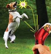Pet Food Catapult Feeder Funny Dog Toy