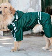 Large and medium dog raincoat
