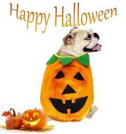 Halloween Pumpkin Makeover