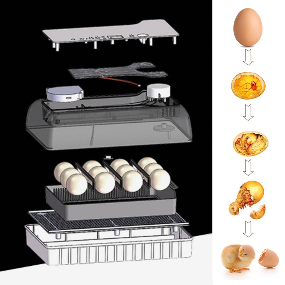 Large-Capacity Intelligent eggs Incubator