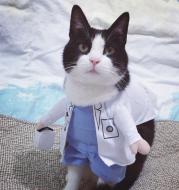 Pet Dog Cat Transformed Clothes Upright Clothes