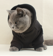 Customized pet clothes with hat text pattern cat dog clothes