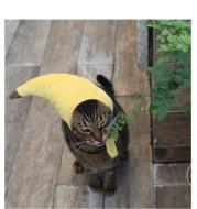 Creative design banana pet hat
