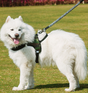 Chest harness dog leash