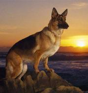 New Full Diamond Sunset Dog Diy Diamond Painting