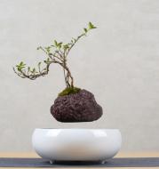 Suspended flower pot