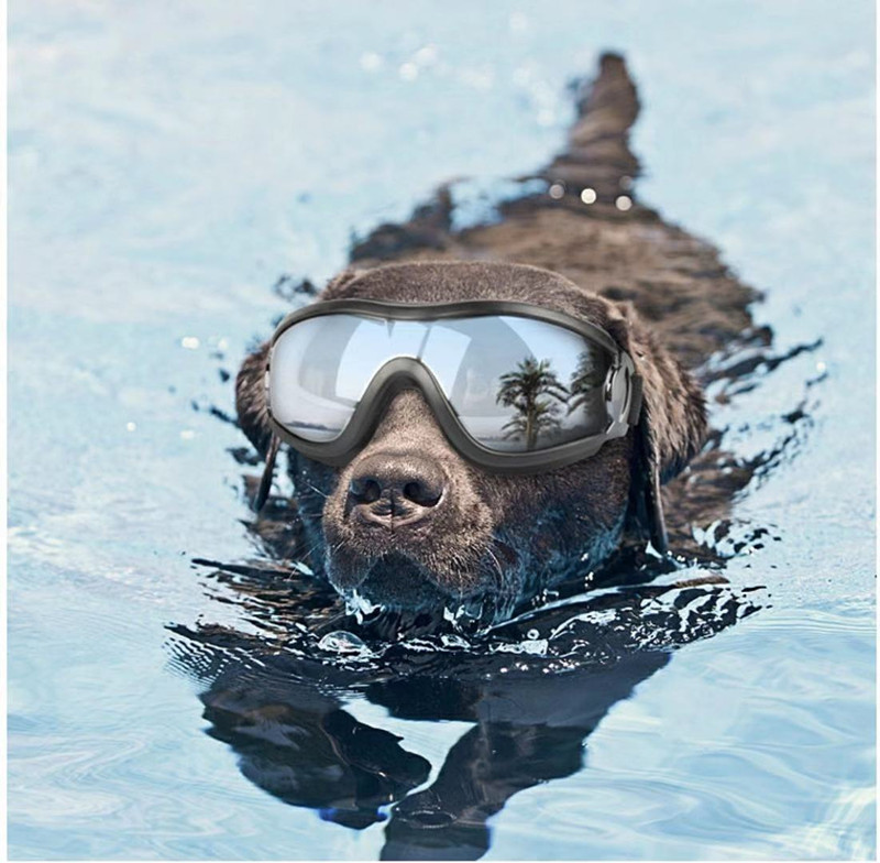 Adjustable Goggles for Dog | Waterproof, Windproof and Anti-UV Goggles for Dog