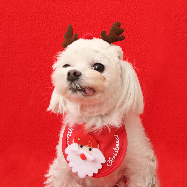 christmas pet costume